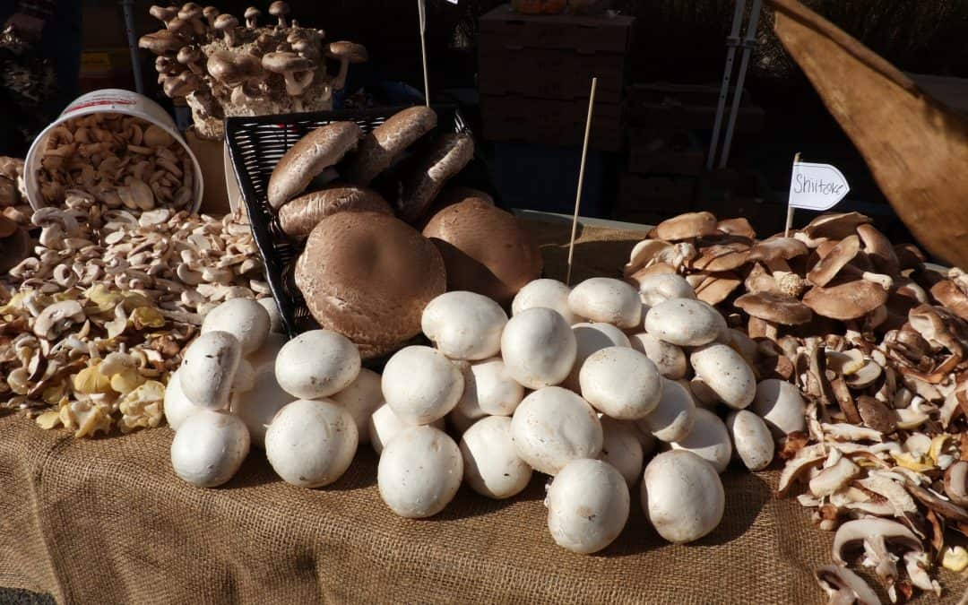 Mushrooms galore at the Fremont County Master Gardeners Farmers Market – And so much more!